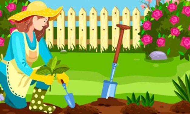 Our Home garden