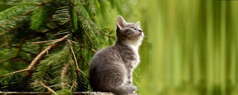 My Pet Cat English essay