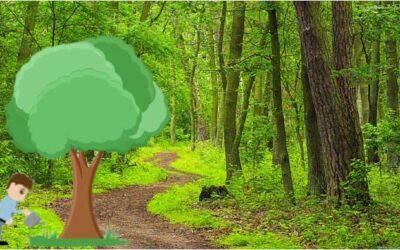 Let's protect trees- by Kenul Adikari